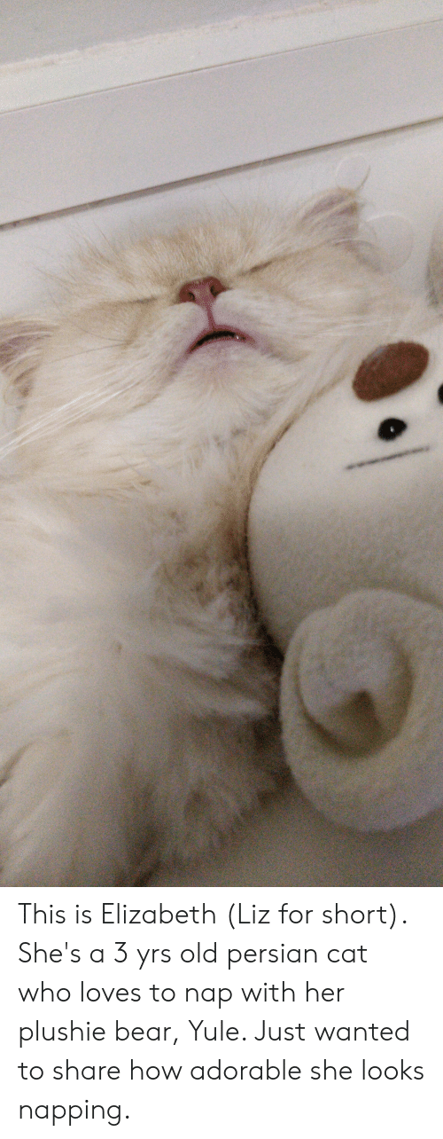 persian cat: This is Elizabeth (Liz for short). She's a 3 yrs old persian cat who loves to nap with her plushie bear, Yule. Just wanted to share how adorable she looks napping.