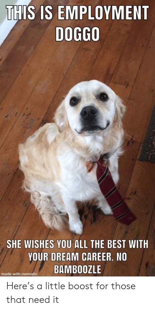 employment: THIS IS EMPLOYMENT  DOG8O  SHE WISHES YOU ALL THE BEST WITH  YOUR DREAM CAREER, NO  e with menateBAMBOOZLE Here's a little boost for those that need it