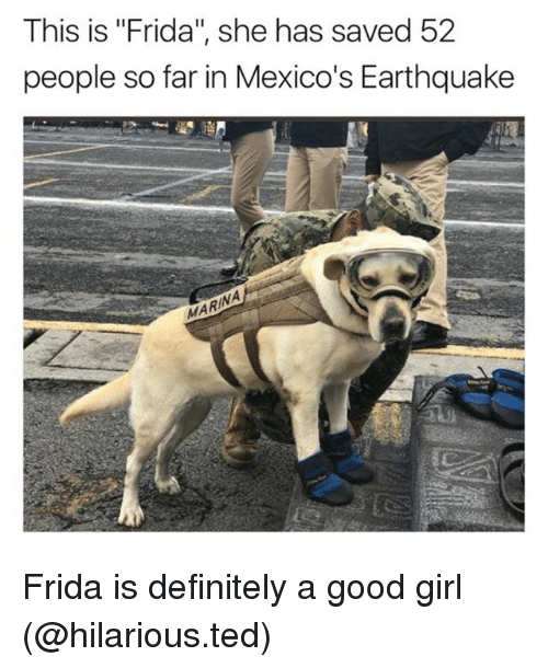 "Definitely, Funny, and Ted: This is ""Frida"", she has saved 52  people so far in Mexico's Earthquake  MARI Frida is definitely a good girl (@hilarious.ted)"