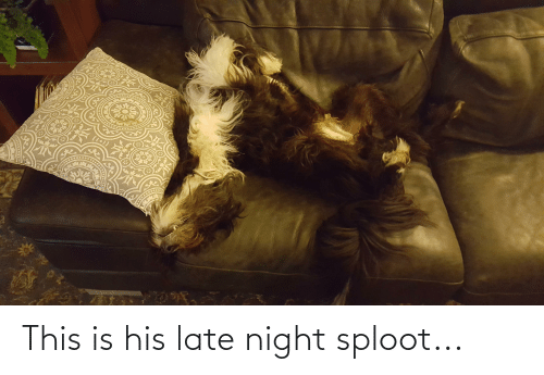 late night: This is his late night sploot...