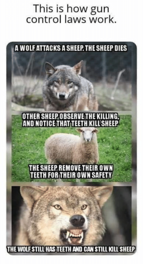 gun control: This is how gun  control laws work.  A WOLF ATTACKS A SHEEP THE SHEEP DIES  OTHER SHEEPOBSERVE THE KILLING,  AND NOTICE THAT TEETH KILLSHEEP  THE SHEEP REMOVE THEIR OWN  TEETH FOR THEIR OWN SAFETY  THE WOLFSTILL HAS TEETH AND CAN STILL KILLSHEEP