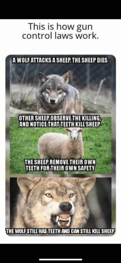 gun control: This is how gun  control laws work.  A WOLFATTACKS A SHEEP.THE SHEEP DIES  OTHER SHEEPOBSERVE THE KILLING  AND NOTICE THAT TEETH KILL'SHEEP  THE SHEEP REMOVE THEIR OWN  TEETH FORTHEIR OWN SAFETY  HE WOLFSTILL HAS TEETH AND CAN STILL KILL SHEEP