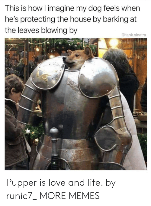 sinatra: This is how I imagine my dog feels when  he's protecting the house by barking at  the leaves blowing by  @tank.sinatra Pupper is love and life. by runic7_ MORE MEMES