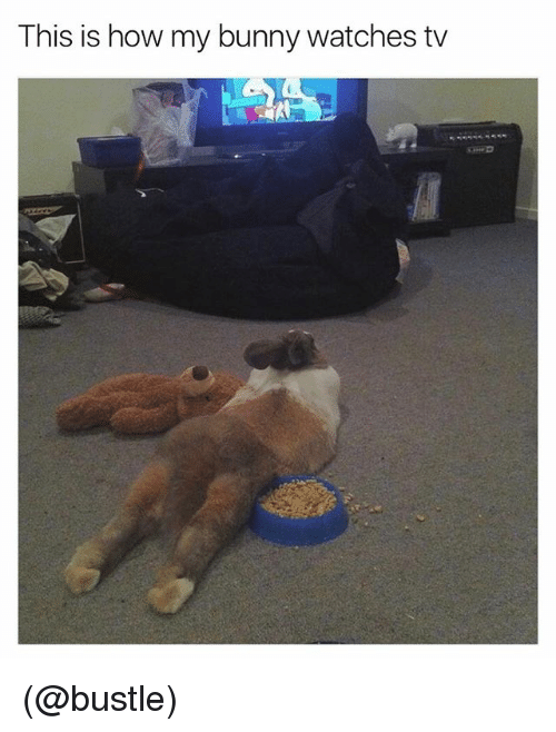Funny, Meme, and Watches: This is how my bunny watches tv (@bustle)
