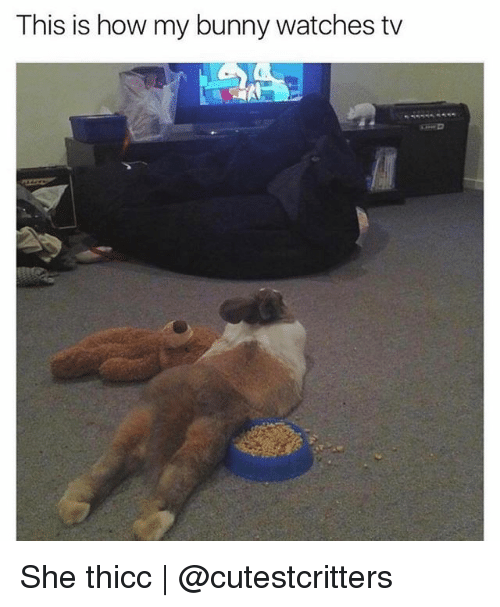 Funny, Watches, and How: This is how my bunny watches tv She thicc | @cutestcritters