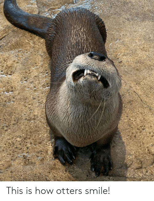 Otters: This is how otters smile!