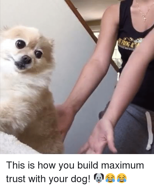 SIZZLE: This is how you build maximum trust with your dog! 🐶😂😂