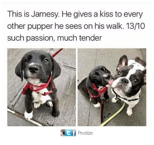 Dank, Kiss, and 🤖: This is Jamesy. He gives a kiss to every  other pupper he sees on his walk. 13/10  such passion, much tender  Gtf Postize