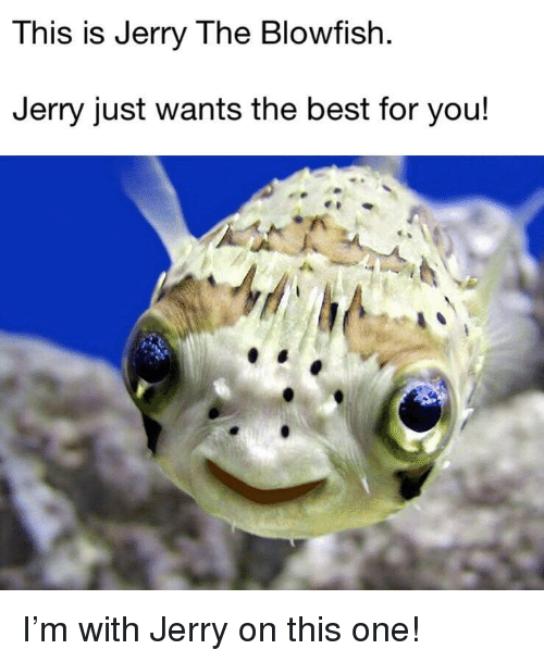 blowfish: This is Jerry The Blowfish  Jerry just wants the best for you! <p>I'm with Jerry on this one!</p>