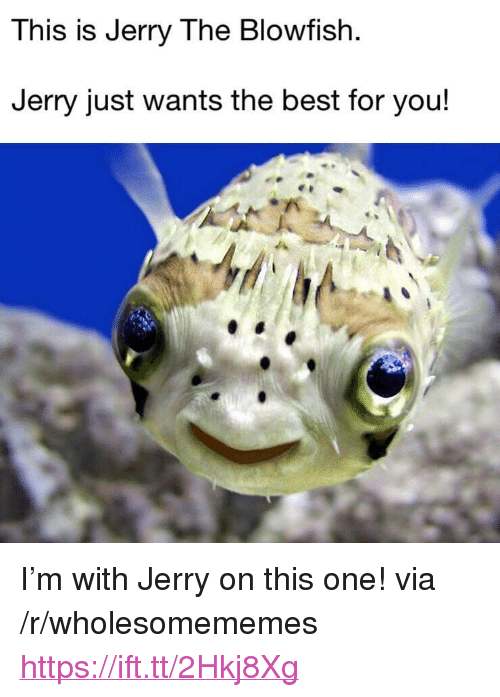"""blowfish: This is Jerry The Blowfish  Jerry just wants the best for you! <p>I'm with Jerry on this one! via /r/wholesomememes <a href=""""https://ift.tt/2Hkj8Xg"""">https://ift.tt/2Hkj8Xg</a></p>"""