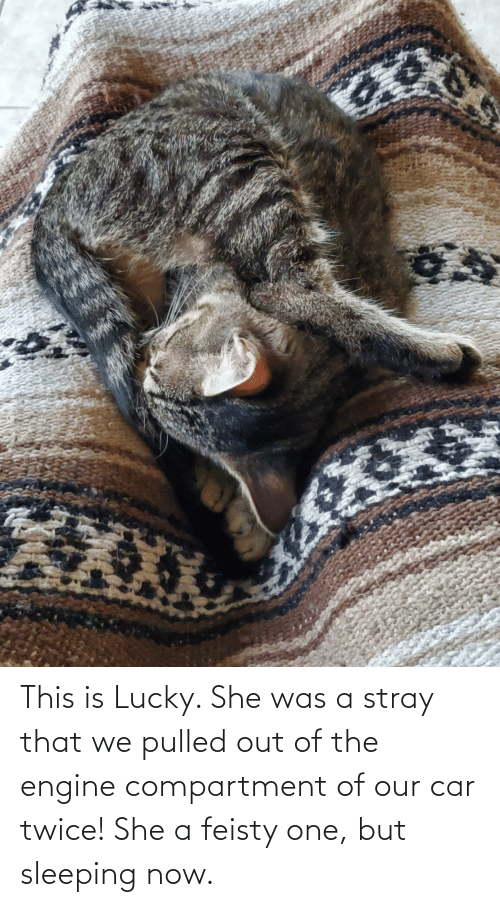 Pulled Out: This is Lucky. She was a stray that we pulled out of the engine compartment of our car twice! She a feisty one, but sleeping now.