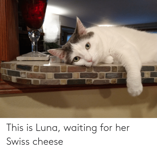 Swiss: This is Luna, waiting for her Swiss cheese