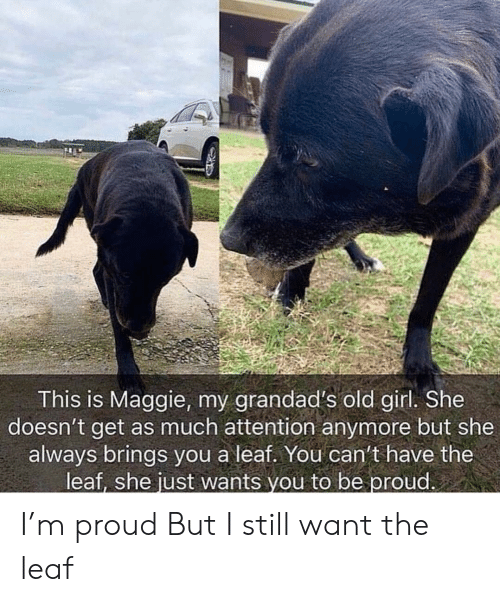 A Leaf: This is Maggie, my grandad's old girl. She  doesn't get as much attention anymore but she  always brings you a leaf. You can't have the  leaf, she just wants you to be proud I'm proud But I still want the leaf