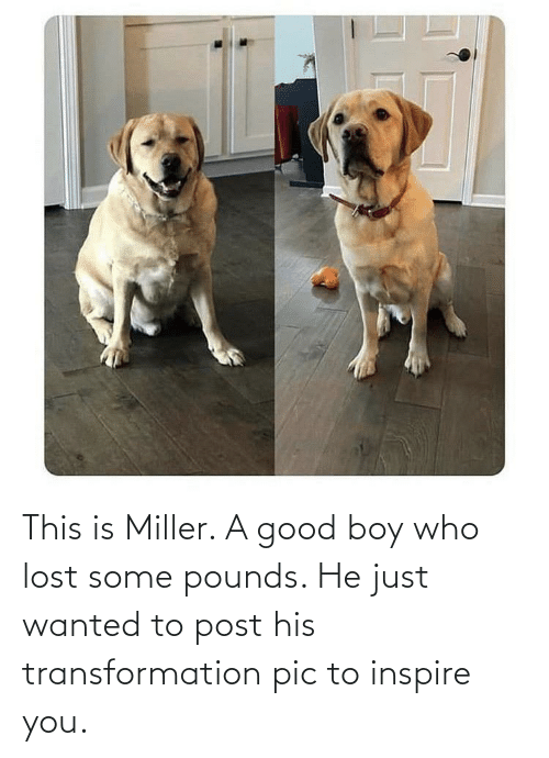 inspire: This is Miller. A good boy who lost some pounds. He just wanted to post his transformation pic to inspire you.