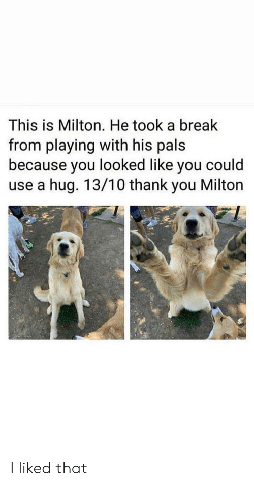 pals: This is Milton. He took a break  from playing with his pals  because you looked like you could  use a hug. 13/10 thank you Milton I liked that