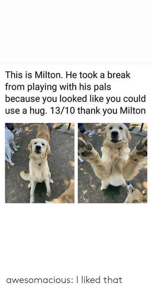 pals: This is Milton. He took a break  from playing with his pals  because you looked like you could  use a hug. 13/10 thank you Milton awesomacious:  I liked that
