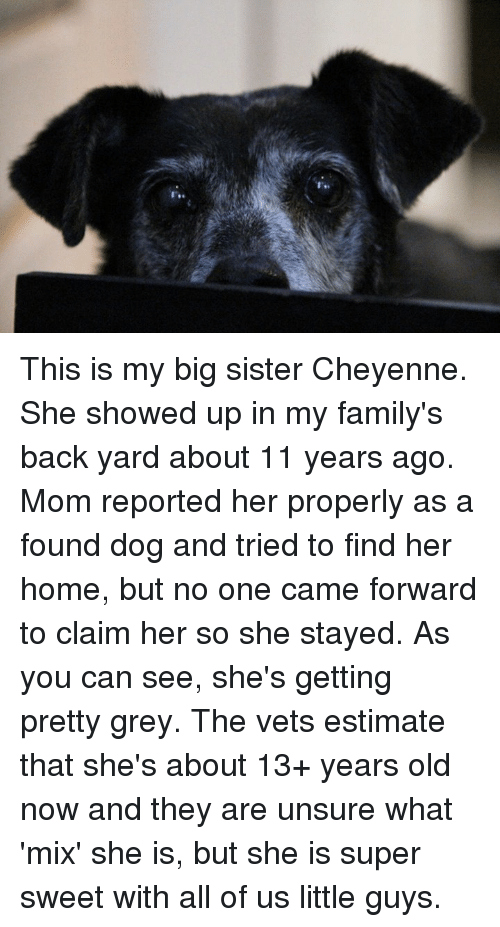 Memes, 13 Year Old, and 🤖: This is my big sister Cheyenne.  She showed up in my family's back yard about 11 years ago.  Mom reported her properly as a found dog and tried to find her home, but no one came forward to claim her so she stayed.  As you can see, she's getting pretty grey.  The vets estimate that she's about 13+ years old now and they are unsure what 'mix' she is, but she is super sweet with all of us little guys.