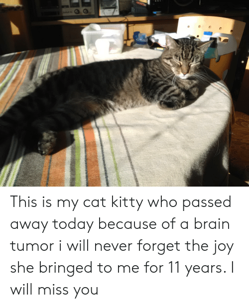bringed: This is my cat kitty who passed away today because of a brain tumor i will never forget the joy she bringed to me for 11 years. I will miss you