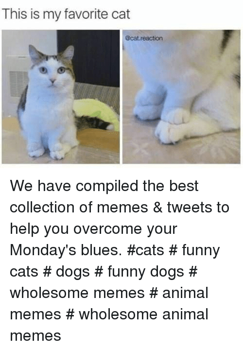 funny cats: This is my favorite cat  @cat reaction We have compiled the best collection of memes & tweets to help you overcome your Monday's blues. #cats # funny cats # dogs # funny dogs # wholesome memes # animal memes # wholesome animal memes