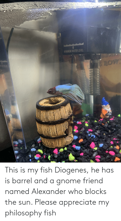 alexander: This is my fish Diogenes, he has is barrel and a gnome friend named Alexander who blocks the sun. Please appreciate my philosophy fish