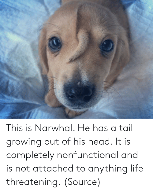 tail: This is Narwhal. He has a tail growing out of his head. It is completely nonfunctional and is not attached to anything life threatening. (Source)