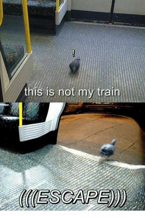 Train, This, and This Is: this is not my train