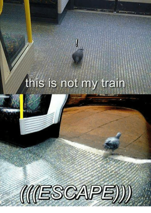Memes, Train, and 🤖: this is not my train  CCESCAPE)