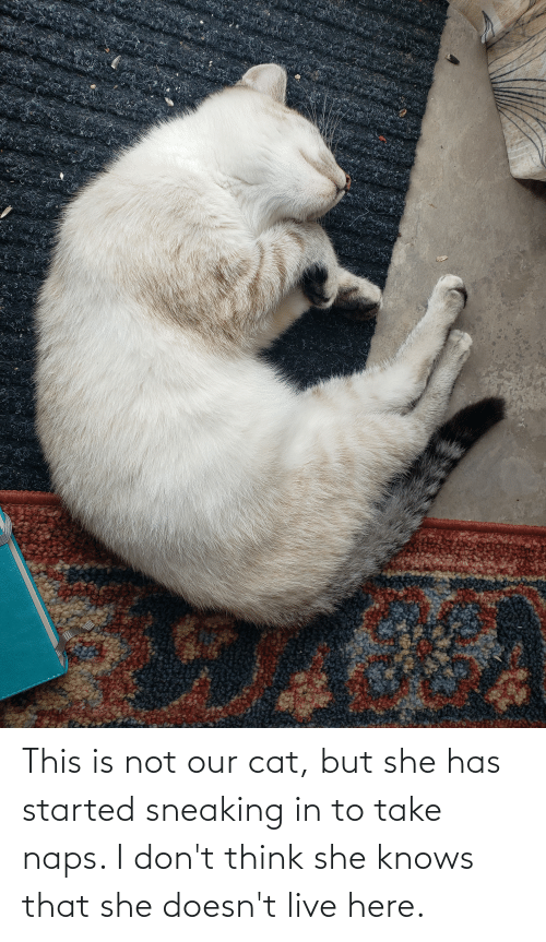 i-dont-think: This is not our cat, but she has started sneaking in to take naps. I don't think she knows that she doesn't live here.