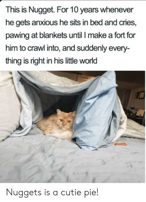 cutie: This is Nugget. For 10 years whenever  he gets anxious he sits in bed and cries,  pawing at blankets until I make a fort for  him to crawl into, and suddenly every-  thing is right in his little world Nuggets is a cutie pie!