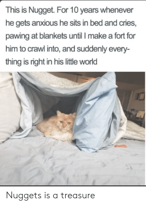 Fort: This is Nugget. For 10 years whenever  he gets anxious he sits in bed and cries,  pawing at blankets until I make a fort for  him to crawl into, and suddenly every-  thing is right in his little world Nuggets is a treasure
