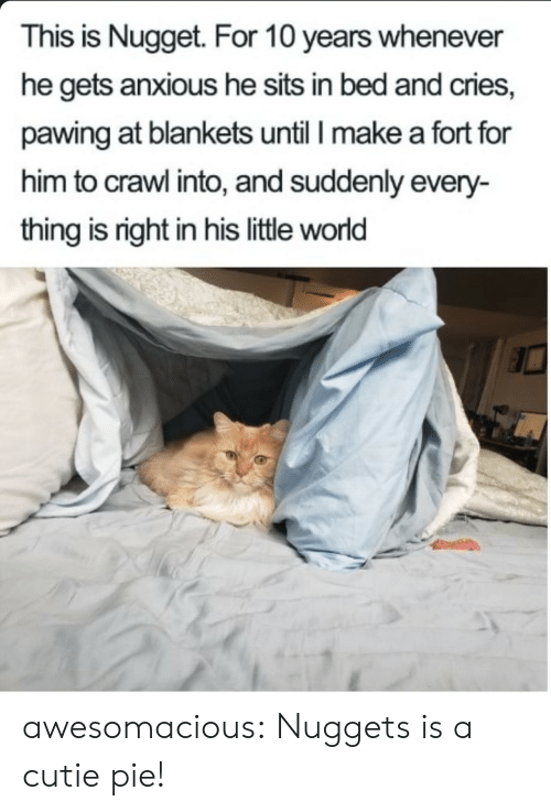 cutie: This is Nugget. For 10 years whenever  he gets anxious he sits in bed and cries,  pawing at blankets until I make a fort for  him to crawl into, and suddenly every-  thing is right in his little world awesomacious:  Nuggets is a cutie pie!