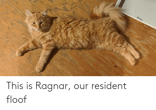ragnar: This is Ragnar, our resident floof