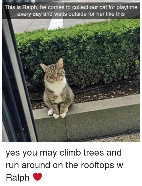 ralphs: This is Ralph, he comes to collect our cat for playtime  every day and waits outside for her like this yes you may climb trees and run around on the rooftops w Ralph ❤️