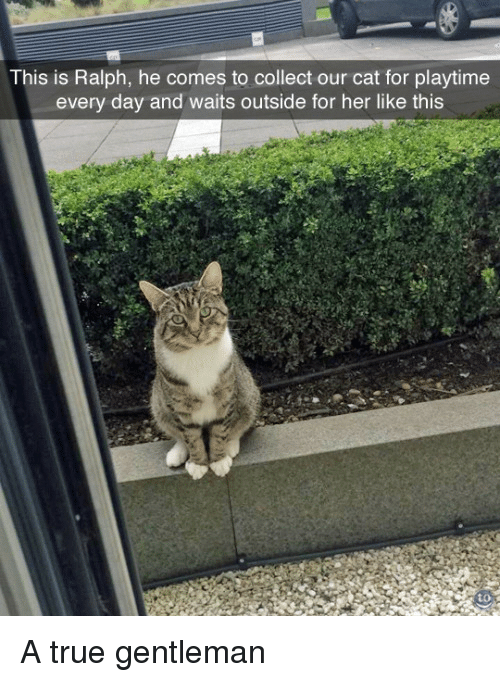 True Gentleman: This is Ralph, he comes to collect our cat for playtime  every day and waits outside for her like this  to A true gentleman