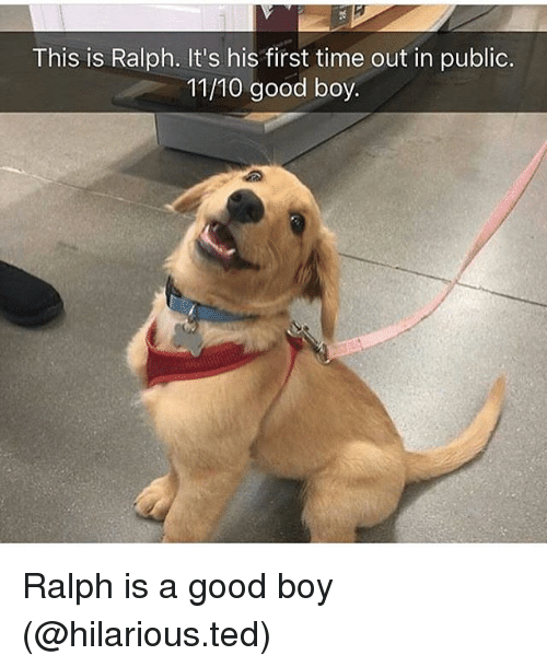 ralphs: This is Ralph. It's his first time out in public.  11/10 good boy Ralph is a good boy (@hilarious.ted)