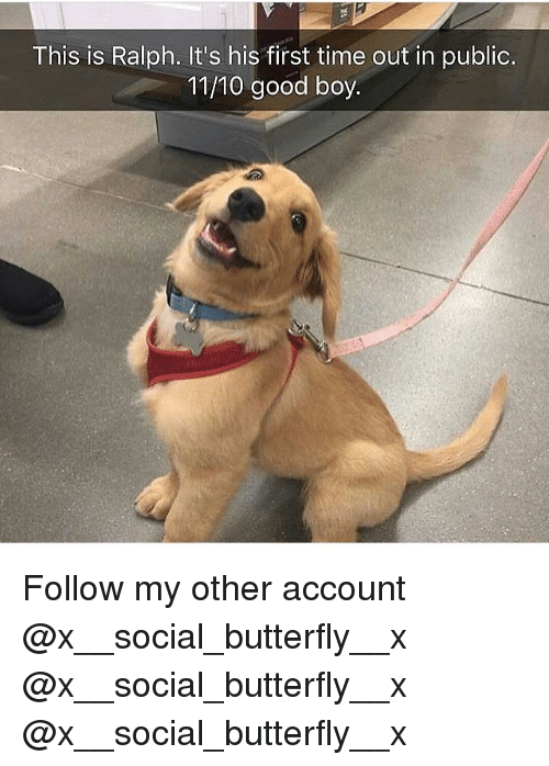 Memes, Butterfly, and Good: This is Ralph. It's his first time out in public.  11/10 good boy. Follow my other account @x__social_butterfly__x @x__social_butterfly__x @x__social_butterfly__x
