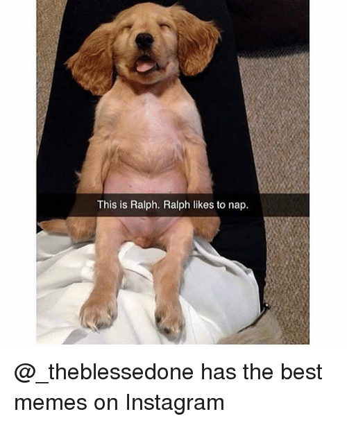 Funny, Instagram, and Memes: This is Ralph. Ralph likes to nap. @_theblessedone has the best memes on Instagram