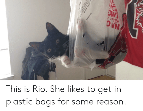 bags: This is Rio. She likes to get in plastic bags for some reason.