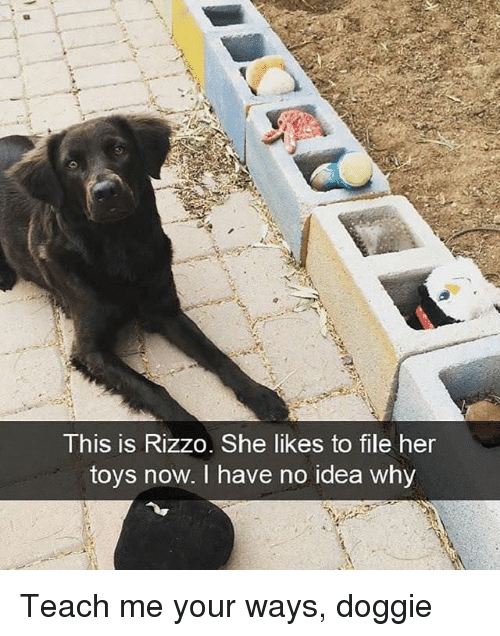 Toys, Idea, and Her: This is Rizzo. She likes to file her  toys  now, I have no idea whv Teach me your ways, doggie
