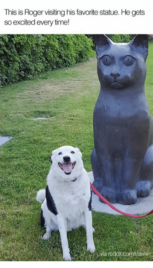 Rogering: This is Roger visiting his favorite statue. He gets  so excited every time!