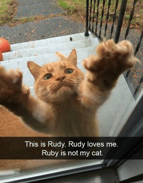 rudy: This is Rudy. Rudy loves mee  Ruby is not my cat.