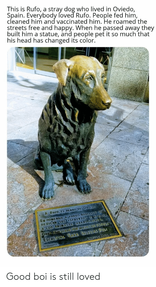 Perro: This is Rufo, a stray dog who lived in Oviedo,  Spain. Everybody foved Rufo. People fed him,  cleaned him and vaccinated him. He roamed the  streets free and happy. When he passed away they  built him a statue, and people pet it so much that  his head has changed its color.  A RUFO, EL PERRO DE OVIEDO  EN HOMENAJE A TODOS AQUELLOS OUG  DEDICAN SUS ESFUERZOS AAYUDA  A LOS ANIMALES ABANDONAPOS  ESCULTORA SARA IGLESIAS POL  SEPTEDBREV01  OBRA K KIZDAPOR INIEATVA POPULAR Good boi is still loved