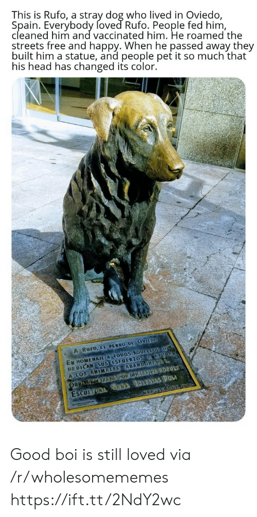 Perro: This is Rufo, a stray dog who lived in Oviedo,  Spain. Everybody foved Rufo. People fed him,  cleaned him and vaccinated him. He roamed the  streets free and happy. When he passed away they  built him a statue, and people pet it so much that  his head has changed its color.  A RUFO, EL PERRO DE OVIEDO  EN HOMENAJE A TODOS AQUELLOS OUG  DEDICAN SUS ESFUERZOS AAYUDA  A LOS ANIMALES ABANDONAPOS  ESCULTORA SARA IGLESIAS POL  SEPTEDBREV01  OBRA K KIZDAPOR INIEATVA POPULAR Good boi is still loved via /r/wholesomememes https://ift.tt/2NdY2wc