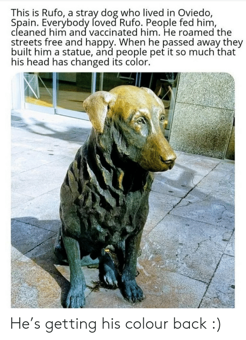 Statue: This is Rufo, a stray dog who lived in Oviedo,  Spain. Everybody foved Rufo. People fed him,  cleaned him and vaccinated him. He roamed the  streets free and happy. When he passed away they  built him a statue, and people pet it so much that  his head has changed its color. He's getting his colour back :)