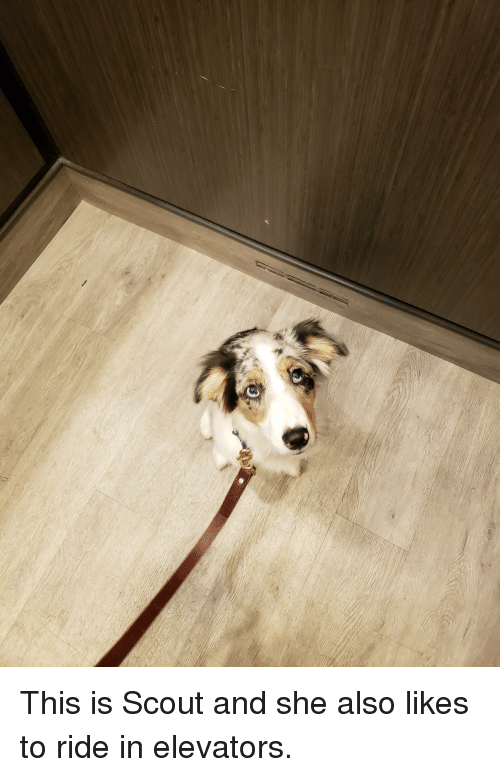 Scout, She, and This: This is Scout and she also likes to ride in elevators.