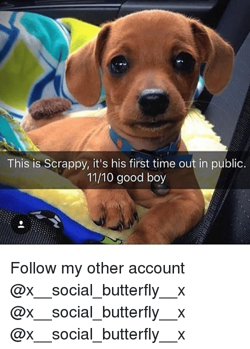 Memes, Butterfly, and Good: This is Scrappy, it's his first time out in public.  11/10 good boy Follow my other account @x__social_butterfly__x @x__social_butterfly__x @x__social_butterfly__x