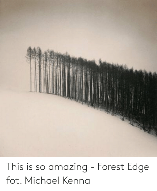 so amazing: This is so amazing - Forest Edge fot. Michael Kenna