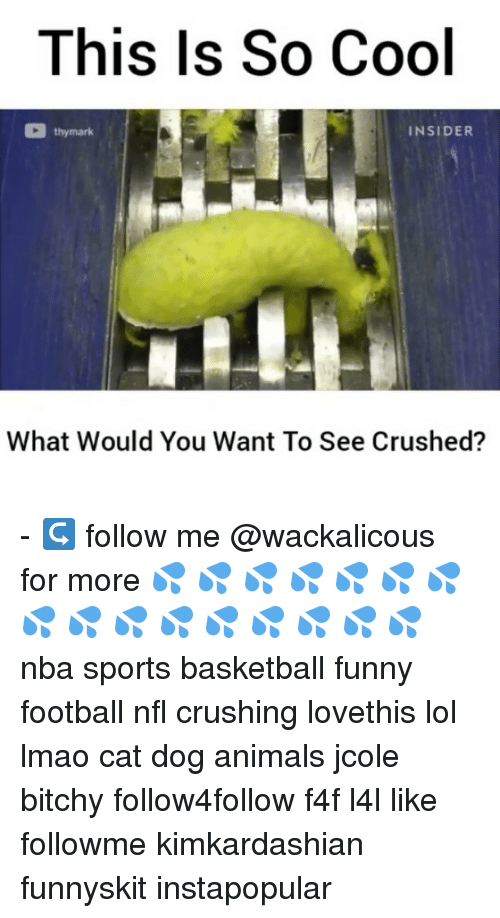cat dog: This Is So Cool  thy mark  INSIDER  What Would You Want To See Crushed? - ↪ follow me @wackalicous for more 💦 💦 💦 💦 💦 💦 💦 💦 💦 💦 💦 💦 💦 💦 💦 💦 nba sports basketball funny football nfl crushing lovethis lol lmao cat dog animals jcole bitchy follow4follow f4f l4l like followme kimkardashian funnyskit instapopular