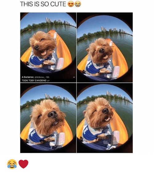 Canoeing: THIS IS SO CUTE  A Gutierrez.  Gr8ones. 10h  TOOK TOBY CANOEING 😂❤️