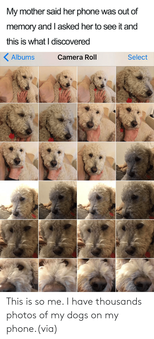 my phone: This is so me. I have thousands photos of my dogs on my phone.(via)